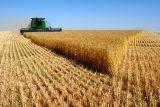 رکورد شکنی کشاورزان دزفول با تولید ۱۶۵ هزار تن محصول گندم/کشاورزان دزفول نقش بسزایی در تحقق شعار اقتصاد مقاومتی ایفا کرده اند