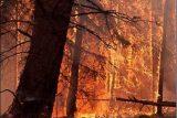 شعله های حریق در منطقه حفاظت شده چهل پا مهار شد