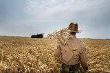 کشاورزان 'عرب حسن' شوشتر خواستار تعیین تکلیف مالکیت اراضی خود شدند