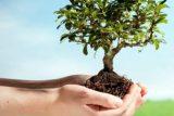 تکیمل پارک فدک عمل به توسعه فضای سبز در اندیمشک/توزیع ۱۵ هزار نهال برای توسعه درختکاری در اندیمشک