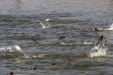 آب مورد نیاز کانال توسط مجتمع پرورش ماهی گرم آبی آزادگان تأمین خواهد شد