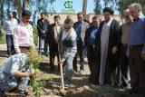 امروزه با صنعتی شدن جوامع بشری درختان نقش مهم تری در زندگی بشر ایفا می کنند
