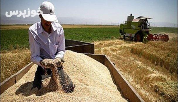 شروع خرید تضمینی گندم و کلزا از کشاورزان در استان خوزستان