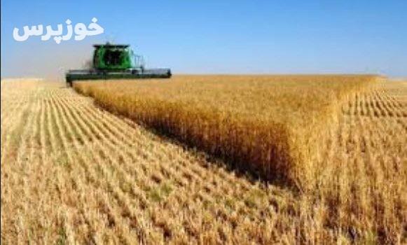 خرید بیش از یک میلیون تن گندم از کشاورزان خوزستان