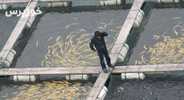 ۶هزارو۵۰۰ هکتار از مزارع پرورش ماهی خوزستان غیرمجاز است