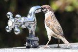 جرایم انشعاب غیرمجاز آب در اندیمشک بخشیده میشود