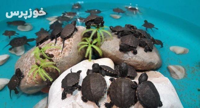 ۴۵ لاکپشت برکهای اروپایی در بازار اندیمشک کشف شد