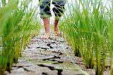 جمعی از شلتوک کاران ۲روستای شوشتر به کمبود آب اعتراض کردند