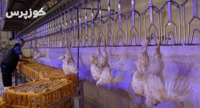فرماندار رامهرمز خواستار تحریم خرید مرغ از سوی مردم شد