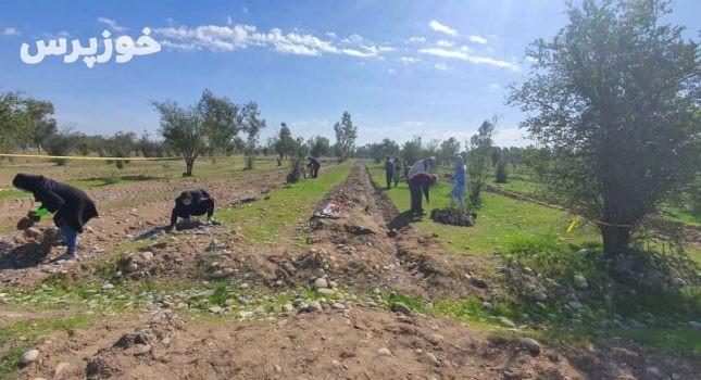 داماد دزفولی ۱۰۰ نهال مهریه عروس را کاشت