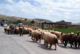 راه کوچ عشایر از قلب ایذه می گذرد/عشایر ناراضی، شهروندان گله مند