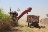 گزارش تصویری خوزپرس از بیست وسومین برداشت نیشکر از مزارع کشت وصنعت امام خمینی (ره) شوشتر